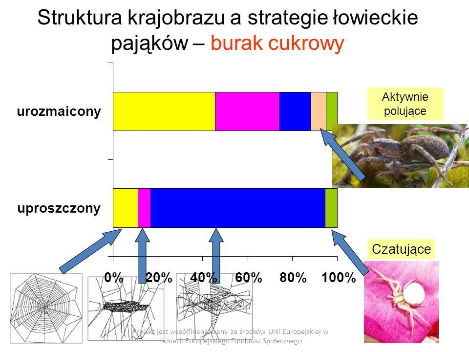 0%20%40%60%80%100% uproszczony urozmaicony Struktura krajobrazu a strategie łowieckie pająków – burak cukrowy Projekt jest współfinansowany ze środków Unii Europejskiej w ramach Europejskiego Funduszu Społecznego Aktywnie polujące Czatujące