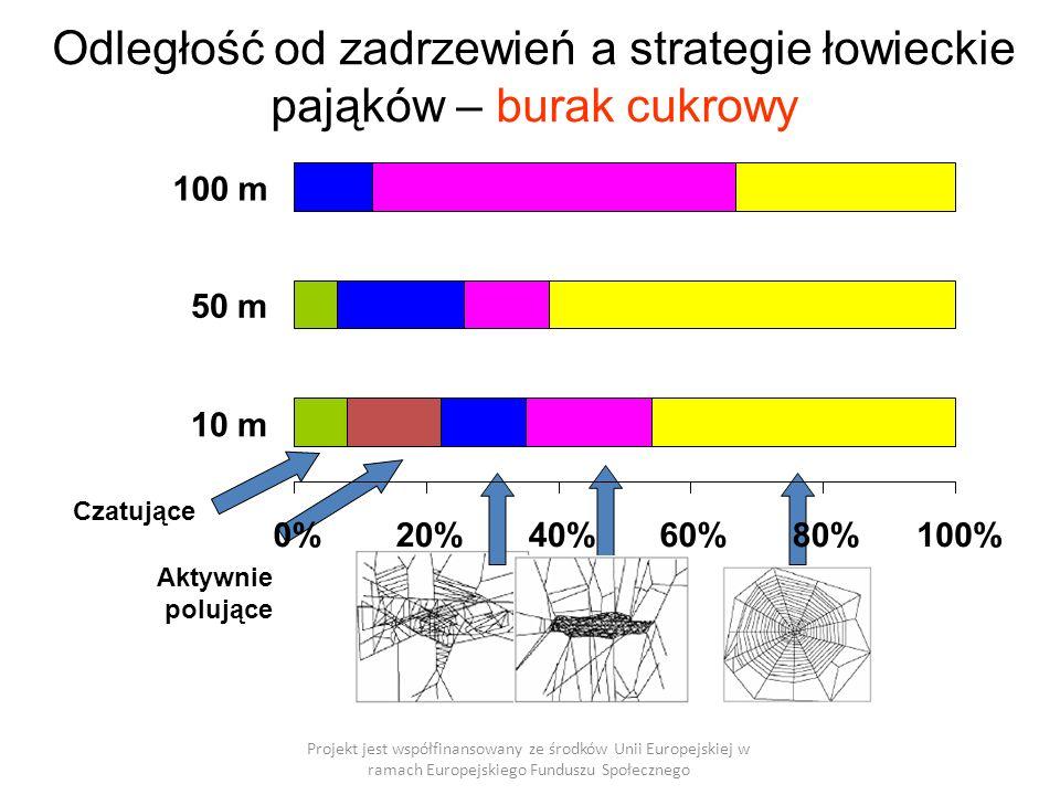 Odległość od zadrzewień a strategie łowieckie pająków – burak cukrowy Projekt jest współfinansowany ze środków Unii Europejskiej w ramach Europejskiego Funduszu Społecznego Czatujące Aktywnie polujące 0%20%40%60%80%100% 10 m 50 m 100 m
