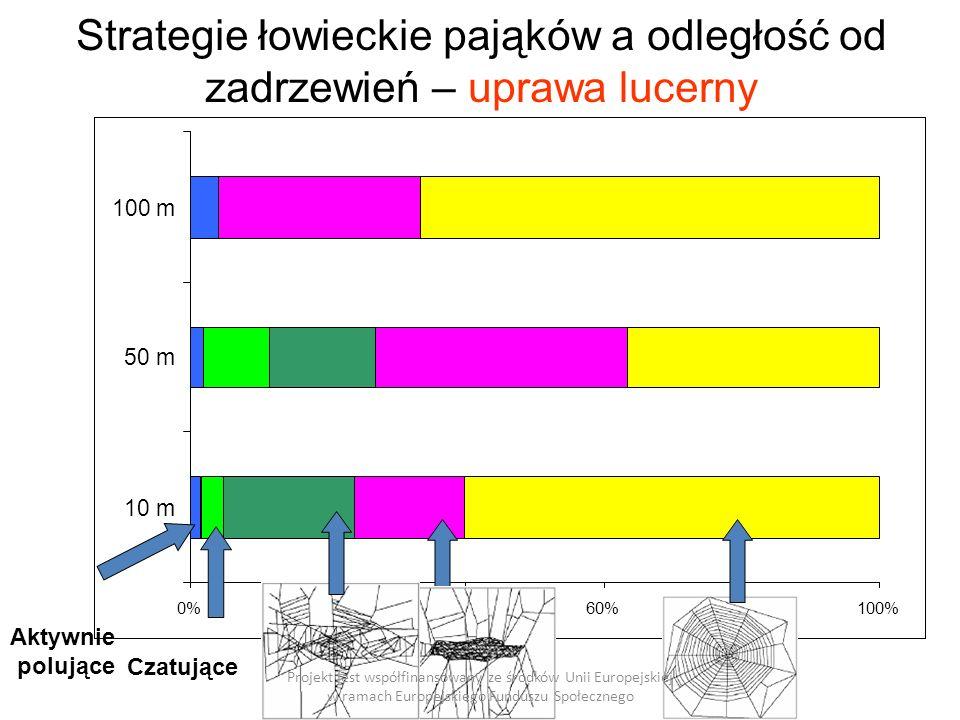 0%20%40%60%80%100% 10 m 50 m 100 m Strategie łowieckie pająków a odległość od zadrzewień – uprawa lucerny Projekt jest współfinansowany ze środków Unii Europejskiej w ramach Europejskiego Funduszu Społecznego Czatujące Aktywnie polujące