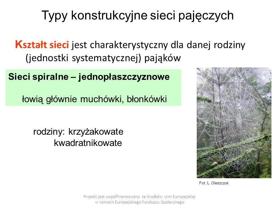 """Przykład strategii łowieckich pająków w uprawie zboża w różnych typach krajobrazu czatujące Projekt jest współfinansowany ze środków Unii Europejskiej w ramach Europejskiego Funduszu Społecznego dominują sieci spiralne """"Nakładka ATP: dla zainteresowanych"""