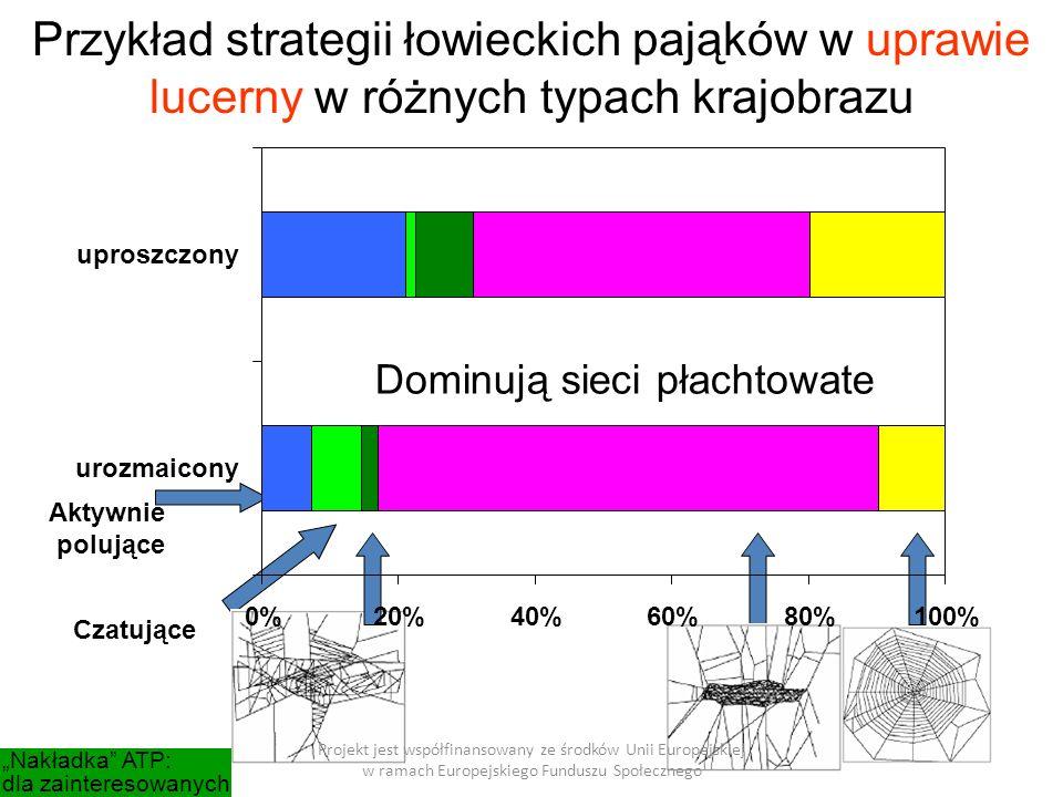 """Projekt jest współfinansowany ze środków Unii Europejskiej w ramach Europejskiego Funduszu Społecznego Przykład strategii łowieckich pająków w uprawie lucerny w różnych typach krajobrazu Dominują sieci płachtowate """"Nakładka ATP: dla zainteresowanych 0%20%40%60%80%100% urozmaicony uproszczony Aktywnie polujące Czatujące"""