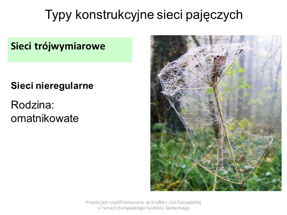 Projekt jest współfinansowany ze środków Unii Europejskiej w ramach Europejskiego Funduszu Społecznego Typy konstrukcyjne sieci pajęczych Sieci trójwymiarowe Sieci nieregularne Rodzina: omatnikowate