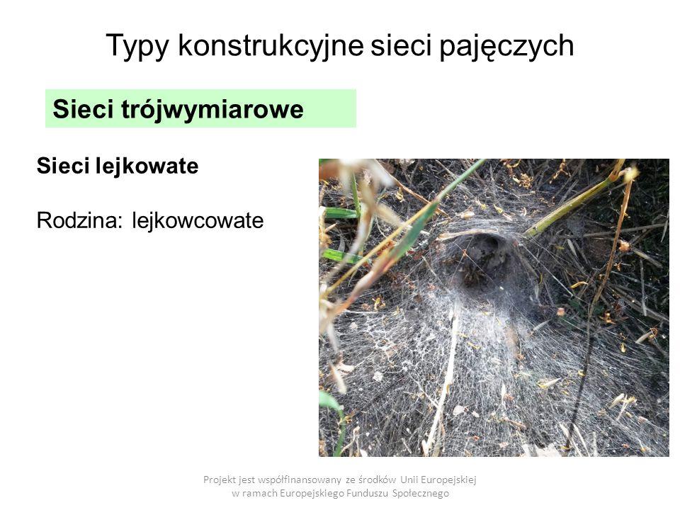 Projekt jest współfinansowany ze środków Unii Europejskiej w ramach Europejskiego Funduszu Społecznego Typy konstrukcyjne sieci pajęczych Sieci trójwymiarowe Sieci lejkowate Rodzina: lejkowcowate
