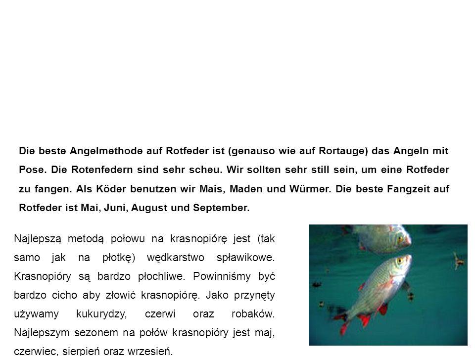 Rotfeder (Rötel, Rotblei) Krasnopióra Die beste Angelmethode auf Rotfeder ist (genauso wie auf Rortauge) das Angeln mit Pose.