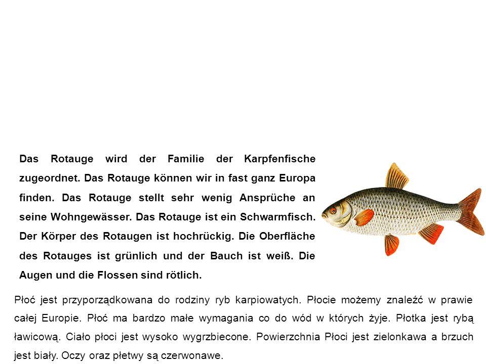 Rotauge (Plötze, Schwal) płoć Rotaugen werden meist mit der Rotfeder verwechseln, weil die beiden Fischarten sehr ähnlich aussehen.