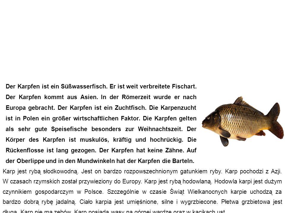 Karpfen karp Der Karpfen ist ein Süßwasserfisch. Er ist weit verbreitete Fischart. Der Karpfen kommt aus Asien. In der Römerzeit wurde er nach Europa