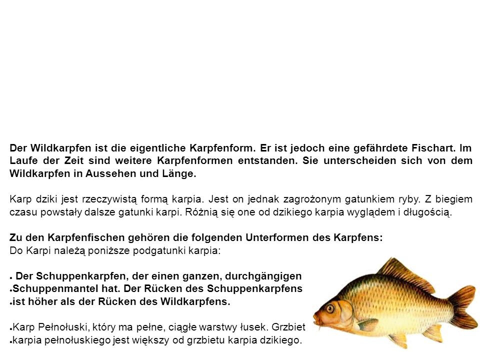 Karpfen karp Der Wildkarpfen ist die eigentliche Karpfenform. Er ist jedoch eine gefährdete Fischart. Im Laufe der Zeit sind weitere Karpfenformen ent