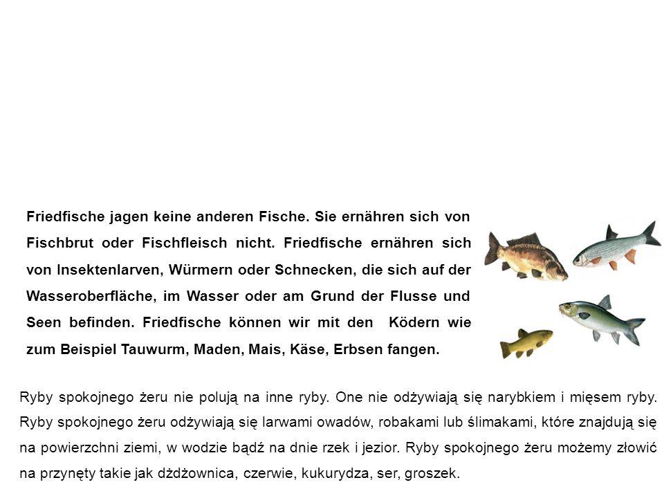 Friedfische ryby spokojnego żeru Friedfische jagen keine anderen Fische. Sie ernähren sich von Fischbrut oder Fischfleisch nicht. Friedfische ernähren