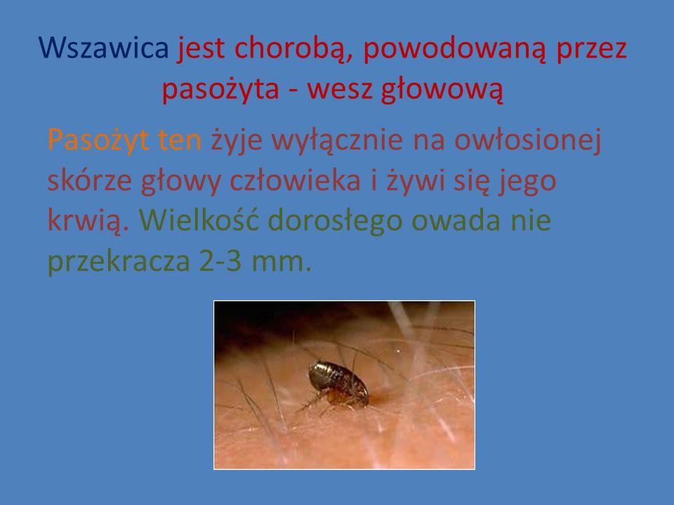 Wszawica jest chorobą, powodowaną przez pasożyta - wesz głowową Pasożyt ten żyje wyłącznie na owłosionej skórze głowy człowieka i żywi się jego krwią.