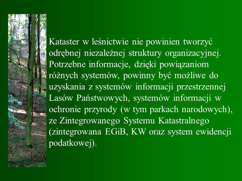 Kataster w leśnictwie nie powinien tworzyć odrębnej niezależnej struktury organizacyjnej.