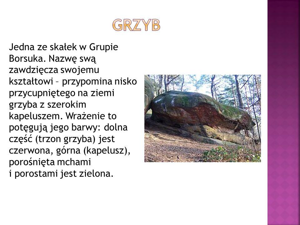 Jedna ze skałek w Grupie Borsuka. Nazwę swą zawdzięcza swojemu kształtowi – przypomina nisko przycupniętego na ziemi grzyba z szerokim kapeluszem. Wra