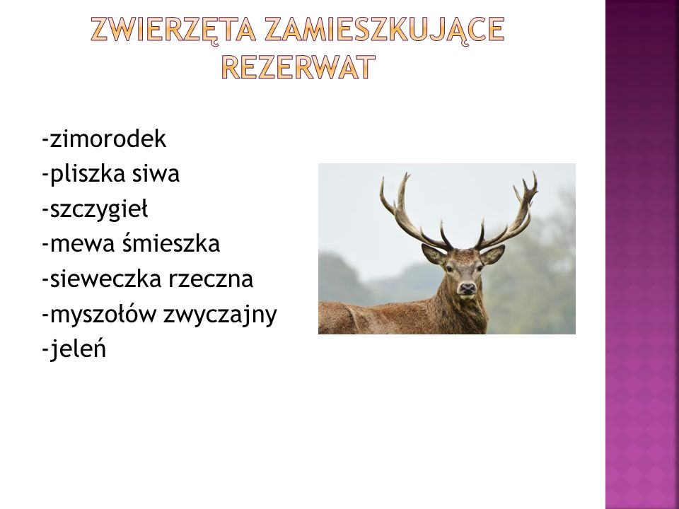 -zimorodek -pliszka siwa -szczygieł -mewa śmieszka -sieweczka rzeczna -myszołów zwyczajny -jeleń