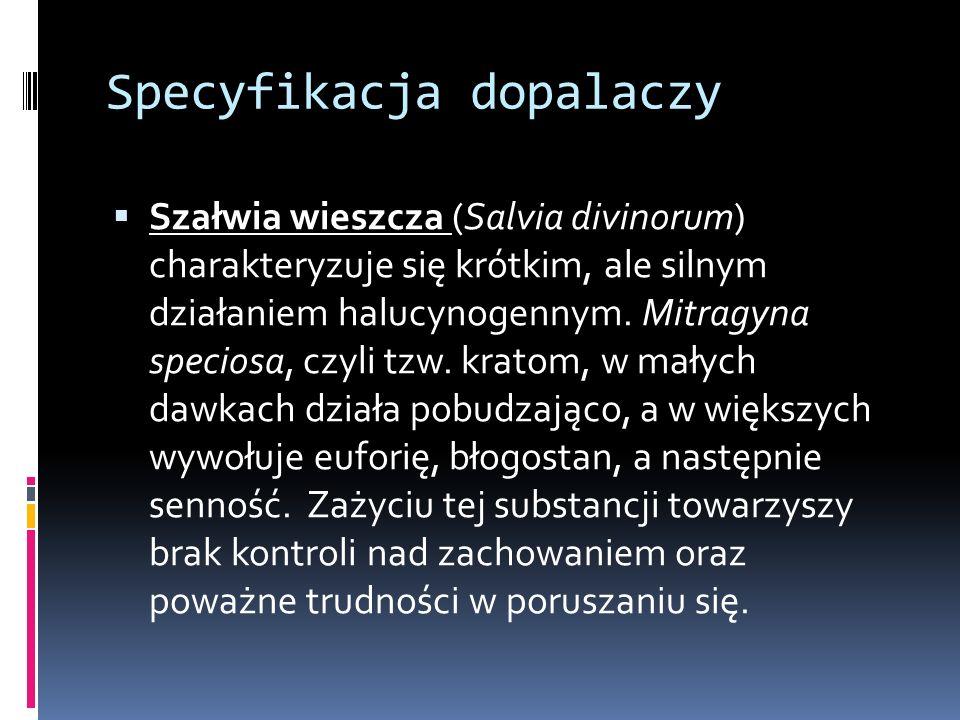 Specyfikacja dopalaczy  Szałwia wieszcza (Salvia divinorum) charakteryzuje się krótkim, ale silnym działaniem halucynogennym.