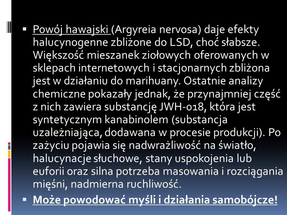  Powój hawajski (Argyreia nervosa) daje efekty halucynogenne zbliżone do LSD, choć słabsze.
