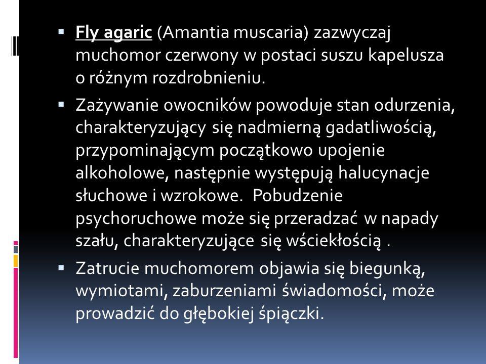  Fly agaric (Amantia muscaria) zazwyczaj muchomor czerwony w postaci suszu kapelusza o różnym rozdrobnieniu.