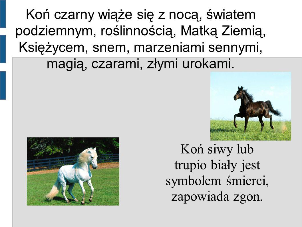 Koń czarny wiąże się z nocą, światem podziemnym, roślinnością, Matką Ziemią, Księżycem, snem, marzeniami sennymi, magią, czarami, złymi urokami. Koń s
