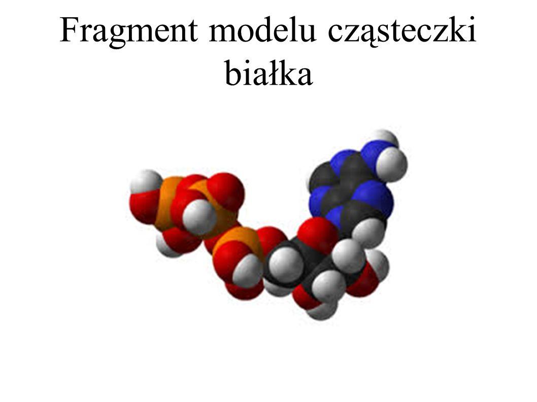 Fragment modelu cząsteczki białka