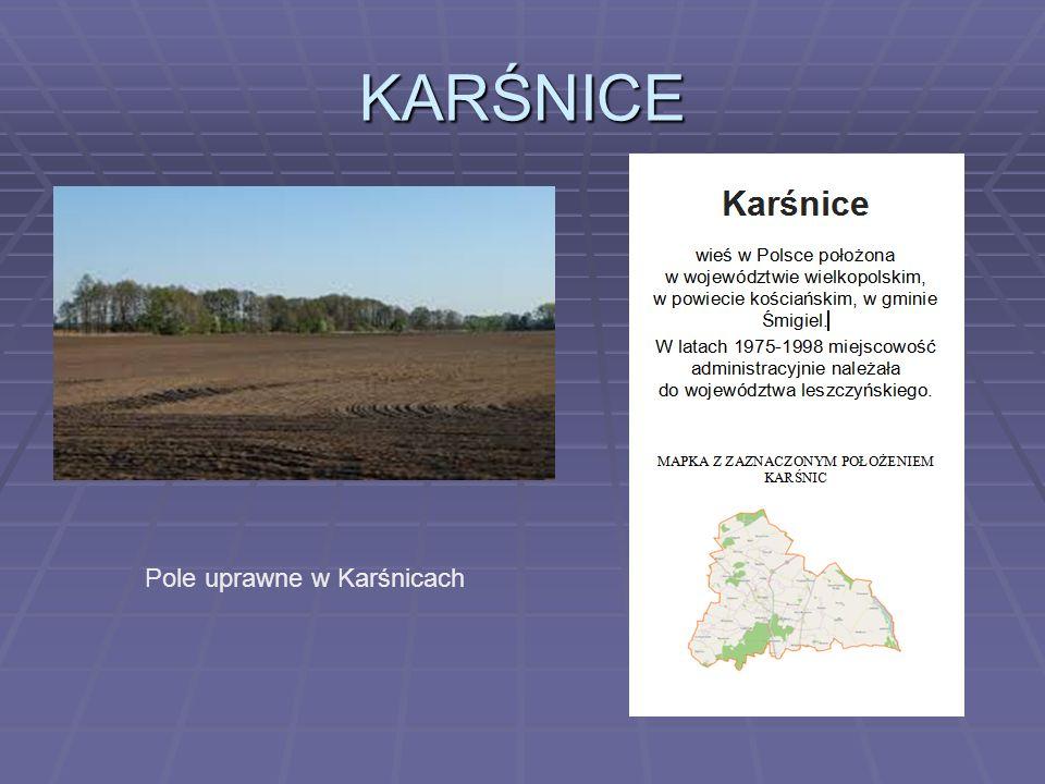KARŚNICE Pole uprawne w Karśnicach