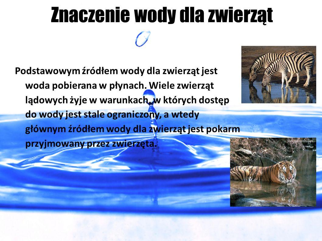Znaczenie wody dla zwierząt Podstawowym źródłem wody dla zwierząt jest woda pobierana w płynach. Wiele zwierząt lądowych żyje w warunkach, w których d