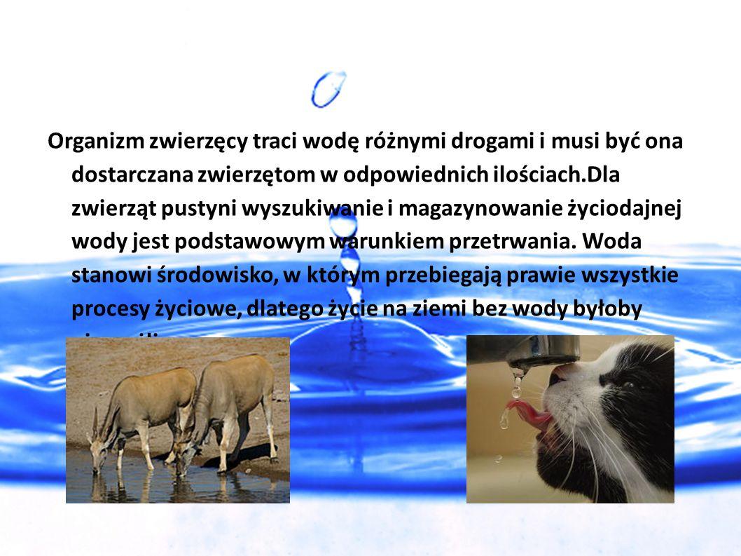 Organizm zwierzęcy traci wodę różnymi drogami i musi być ona dostarczana zwierzętom w odpowiednich ilościach.Dla zwierząt pustyni wyszukiwanie i magaz