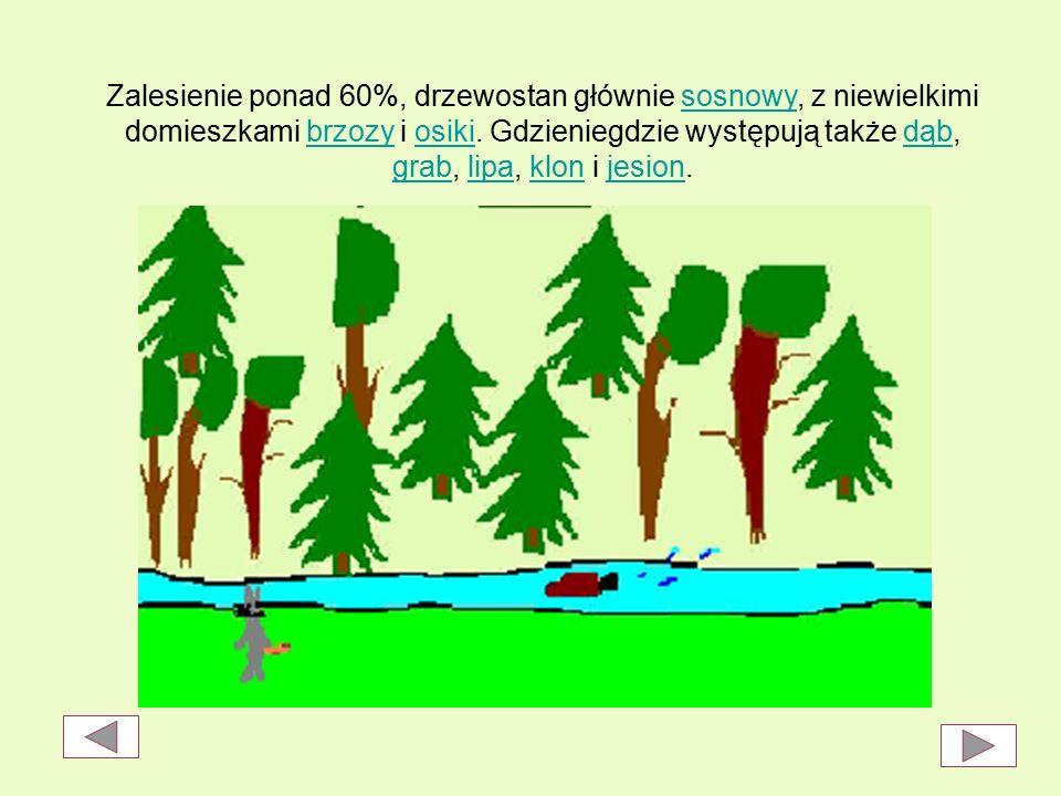 Zalesienie ponad 60%, drzewostan głównie sosnowy, z niewielkimi domieszkami brzozy i osiki.