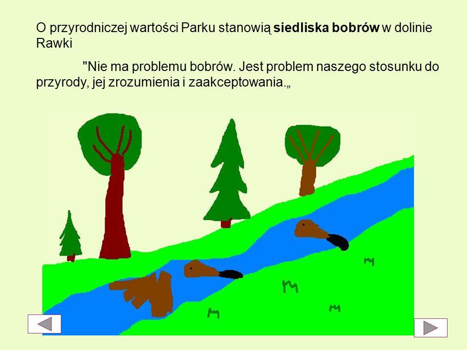 O przyrodniczej wartości Parku stanowią siedliska bobrów w dolinie Rawki Nie ma problemu bobrów.