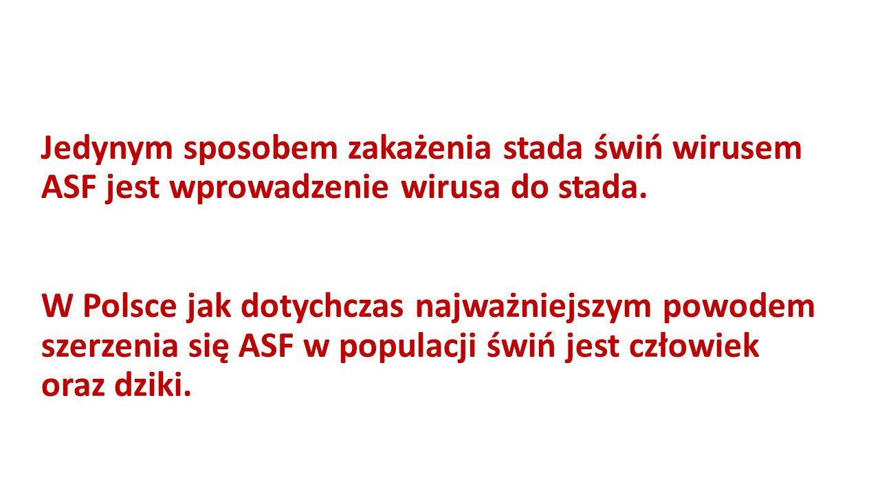 Jedynym sposobem zakażenia stada świń wirusem ASF jest wprowadzenie wirusa do stada.