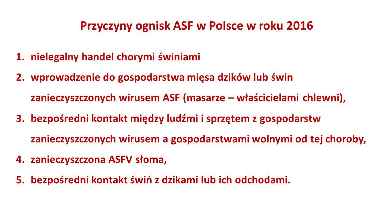 Przyczyny ognisk ASF w Polsce w roku 2016 1.nielegalny handel chorymi świniami 2.wprowadzenie do gospodarstwa mięsa dzików lub świn zanieczyszczonych wirusem ASF (masarze – właścicielami chlewni), 3.bezpośredni kontakt między ludźmi i sprzętem z gospodarstw zanieczyszczonych wirusem a gospodarstwami wolnymi od tej choroby, 4.zanieczyszczona ASFV słoma, 5.bezpośredni kontakt świń z dzikami lub ich odchodami.