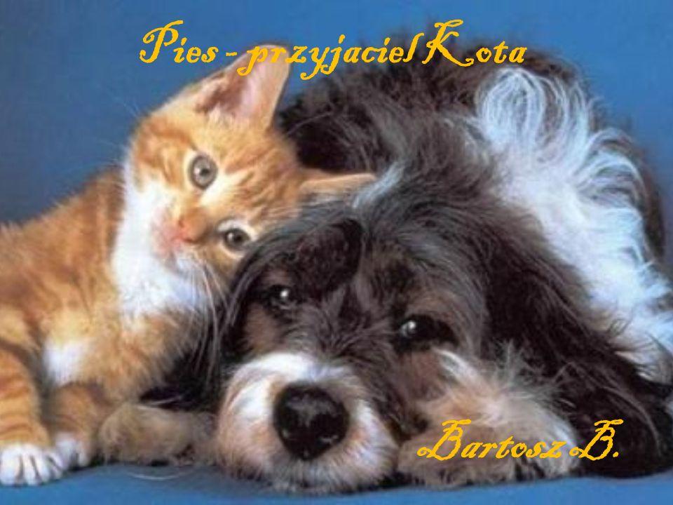 Pies - przyjaciel Kota Bartosz B.