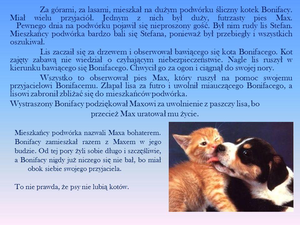 Za górami, za lasami, mieszka ł na du ż ym podwórku ś liczny kotek Bonifacy. Mia ł wielu przyjació ł. Jednym z nich by ł du ż y, futrzasty pies Max. P