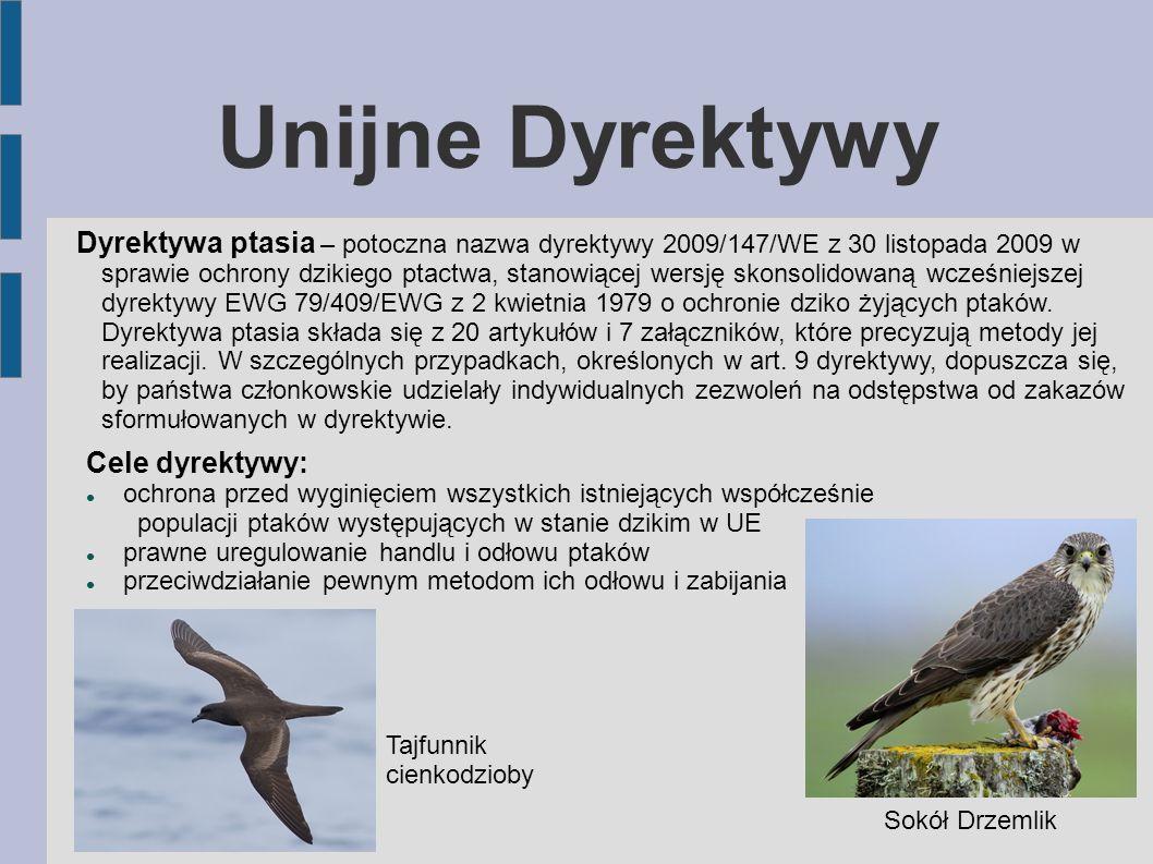 Unijne Dyrektywy Cele dyrektywy: ochrona przed wyginięciem wszystkich istniejących współcześnie populacji ptaków występujących w stanie dzikim w UE pr