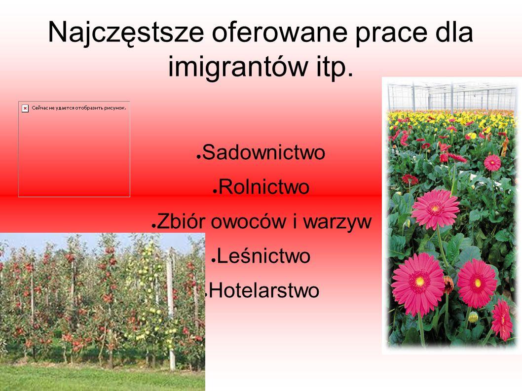 Najczęstsze oferowane prace dla imigrantów itp. ● Sadownictwo ● Rolnictwo ● Zbiór owoców i warzyw ● Leśnictwo ● Hotelarstwo