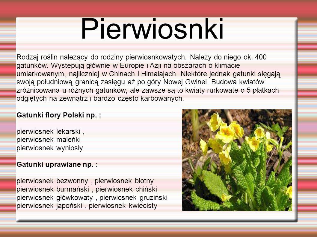 Pierwiosnki Rodzaj roślin należący do rodziny pierwiosnkowatych.