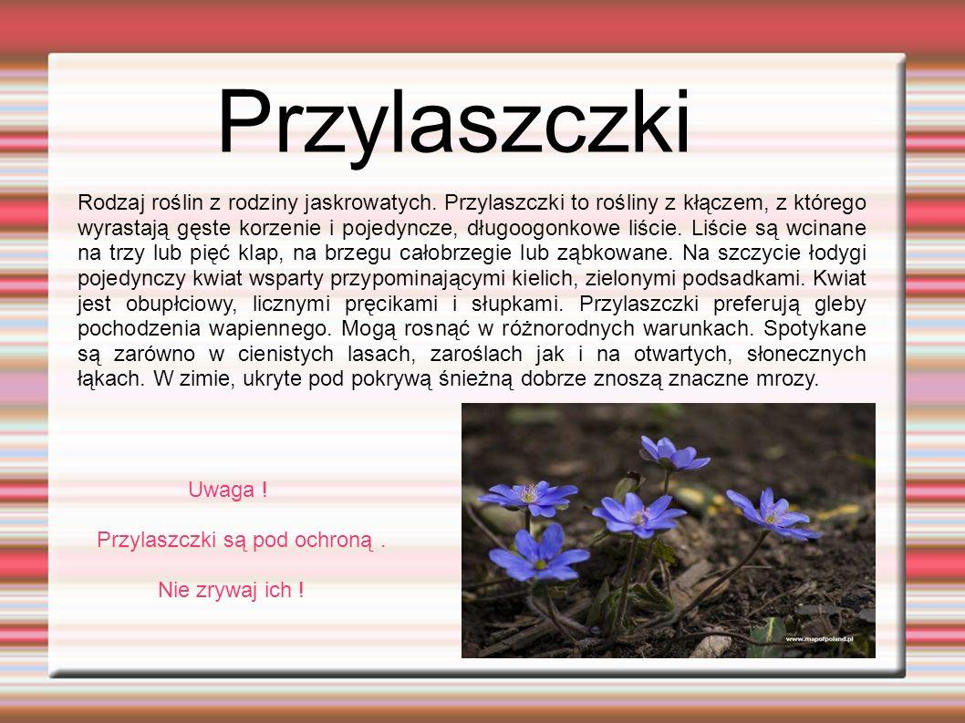Miodunki.Rodzaj roślin należący do rodziny ogórecznikowatych.