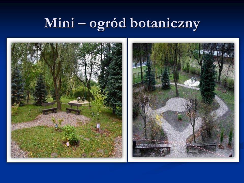 Mini – ogród botaniczny