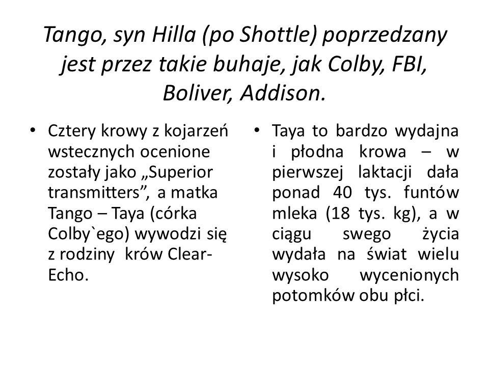Tango, syn Hilla (po Shottle) poprzedzany jest przez takie buhaje, jak Colby, FBI, Boliver, Addison.