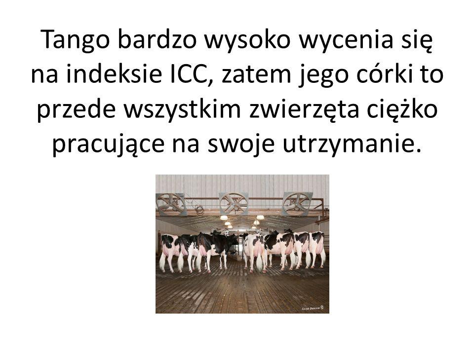 Tango uzyskał na polskim indeksie PF wartość 140 (wycena 1/2016): -podindeks produkcyjny 134, -podindeks pokroju 116, -podindeks płodności 99, -wydajność mleka 1809 kg, -długowieczność 111 - komórki somatyczne 101