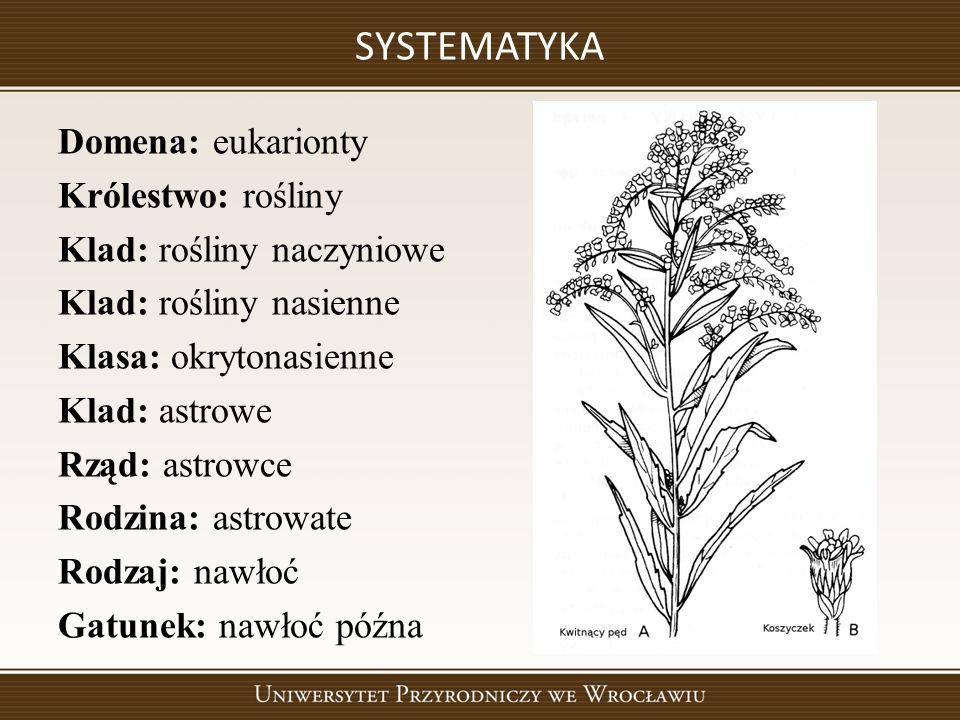SYSTEMATYKA Domena: eukarionty Królestwo: rośliny Klad: rośliny naczyniowe Klad: rośliny nasienne Klasa: okrytonasienne Klad: astrowe Rząd: astrowce Rodzina: astrowate Rodzaj: nawłoć Gatunek: nawłoć późna