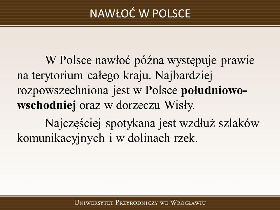 NAWŁOĆ W POLSCE W Polsce nawłoć późna występuje prawie na terytorium całego kraju.
