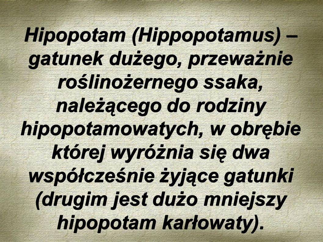 Hipopotam (Hippopotamus) – gatunek dużego, przeważnie roślinożernego ssaka, należącego do rodziny hipopotamowatych, w obrębie której wyróżnia się dwa współcześnie żyjące gatunki (drugim jest dużo mniejszy hipopotam karłowaty).