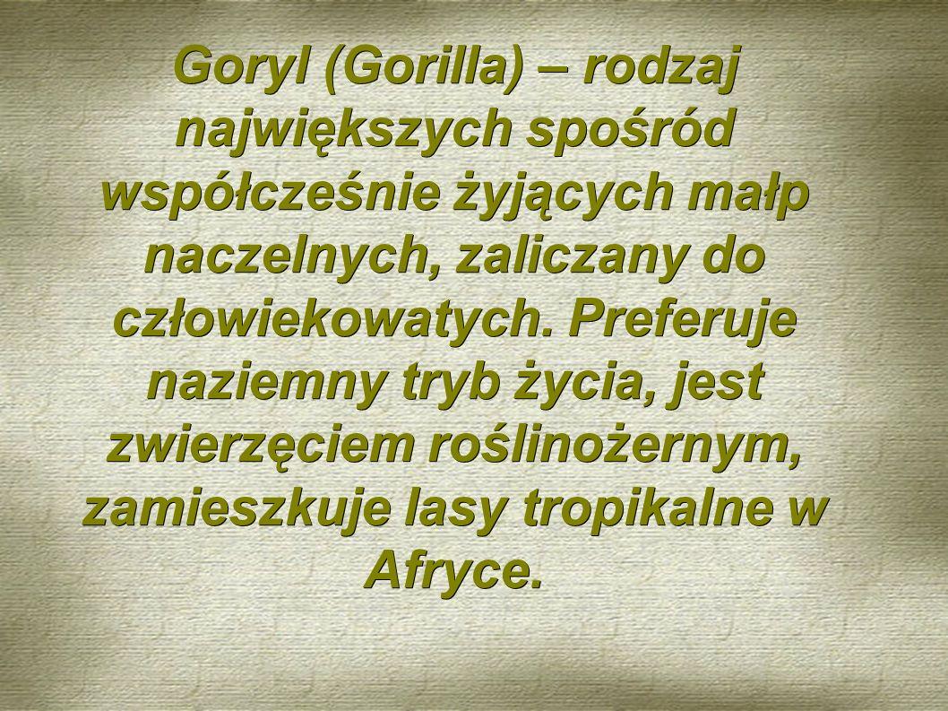 Goryl (Gorilla) – rodzaj największych spośród współcześnie żyjących małp naczelnych, zaliczany do człowiekowatych.