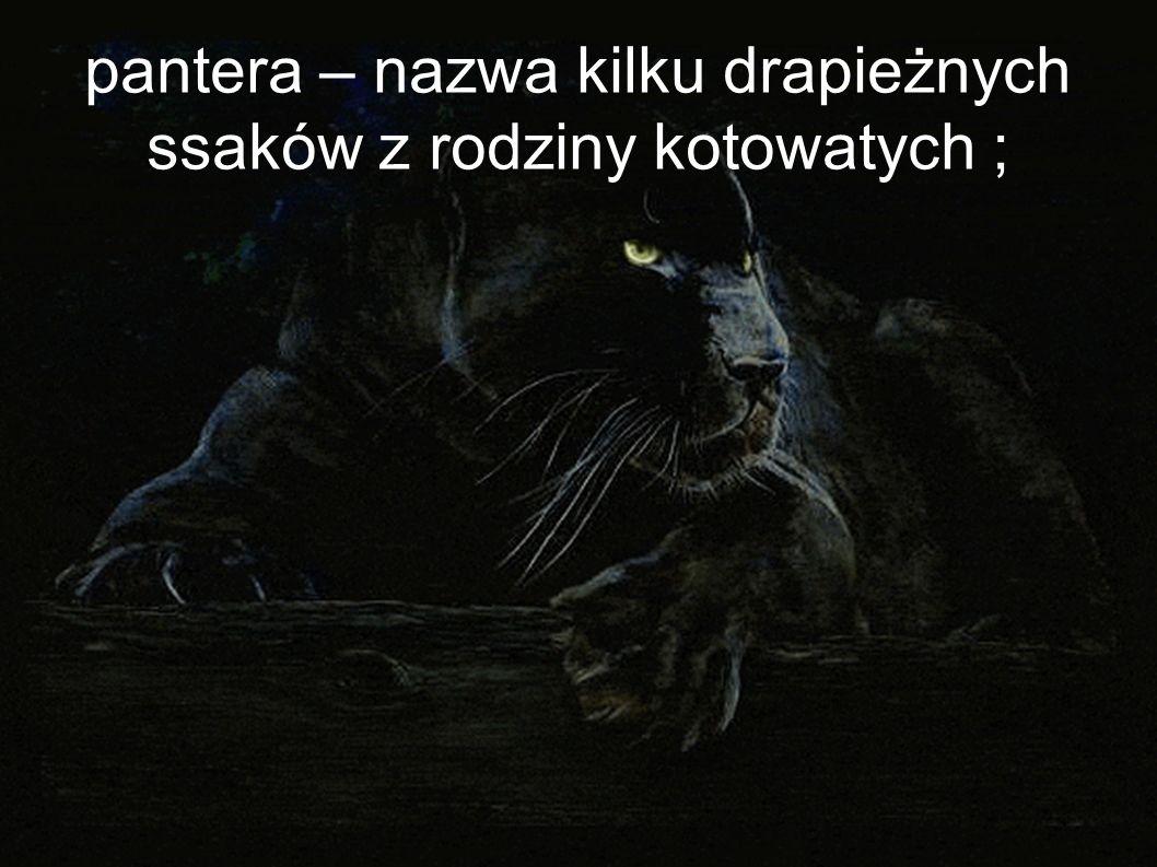 pantera – nazwa kilku drapieżnych ssaków z rodziny kotowatych ;