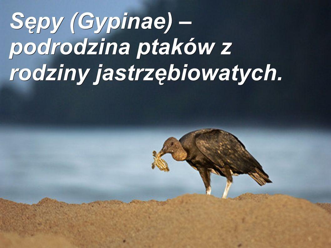 Sępy (Gypinae) – podrodzina ptaków z rodziny jastrzębiowatych.