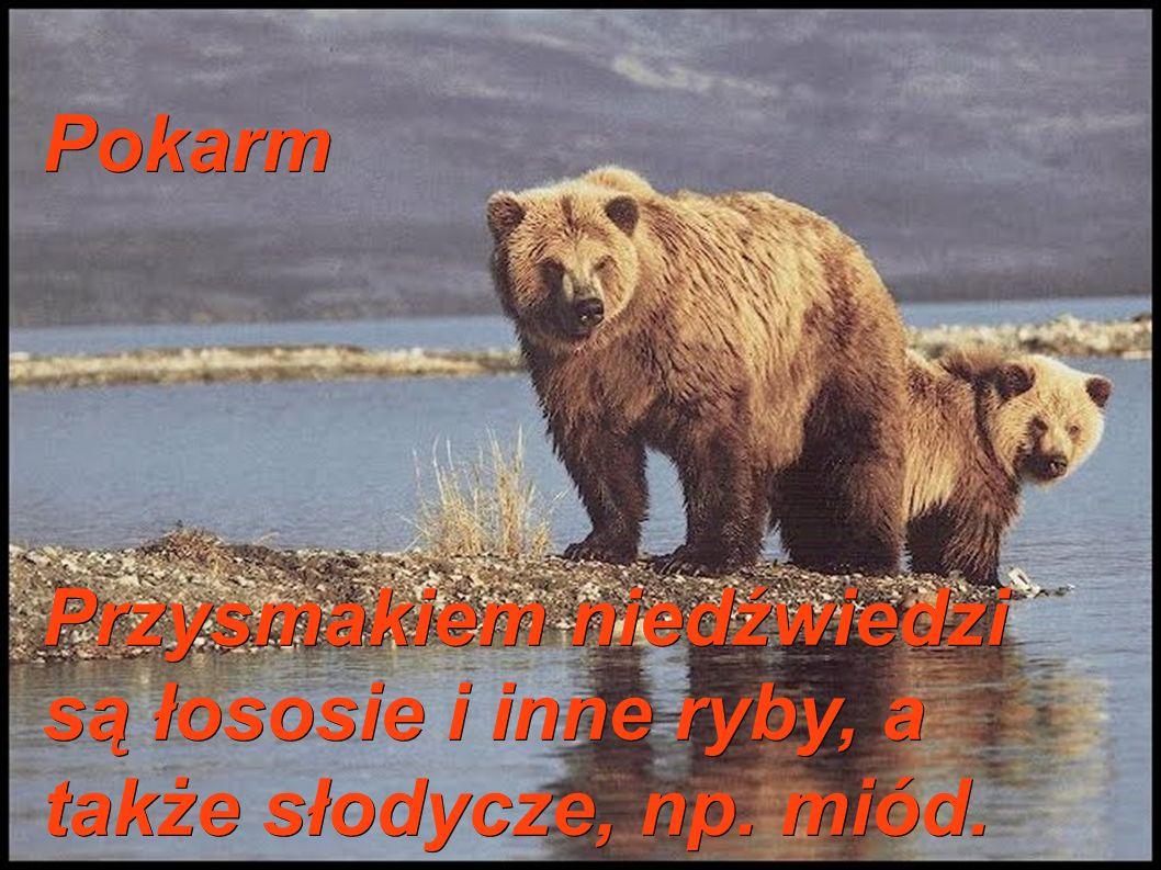 Pokarm Przysmakiem niedźwiedzi są łososie i inne ryby, a także słodycze, np. miód.