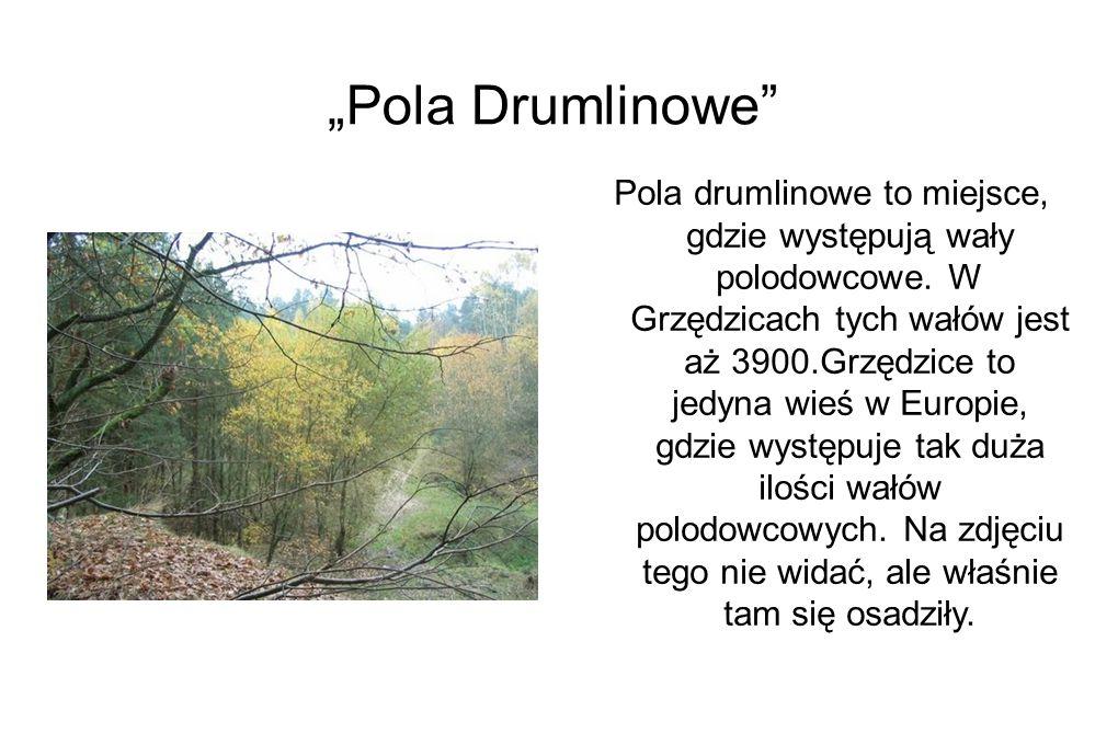 """""""Pola Drumlinowe Pola drumlinowe to miejsce, gdzie występują wały polodowcowe."""
