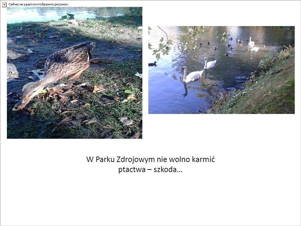 W Parku Zdrojowym nie wolno karmić ptactwa – szkoda…