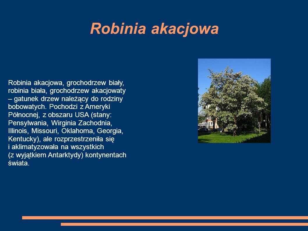 Robinia akacjowa Robinia akacjowa, grochodrzew biały, robinia biała, grochodrzew akacjowaty – gatunek drzew należący do rodziny bobowatych.