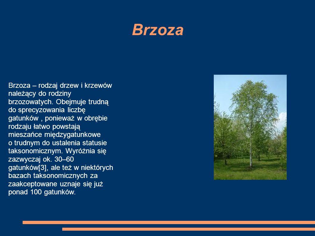 Brzoza Brzoza – rodzaj drzew i krzewów należący do rodziny brzozowatych.