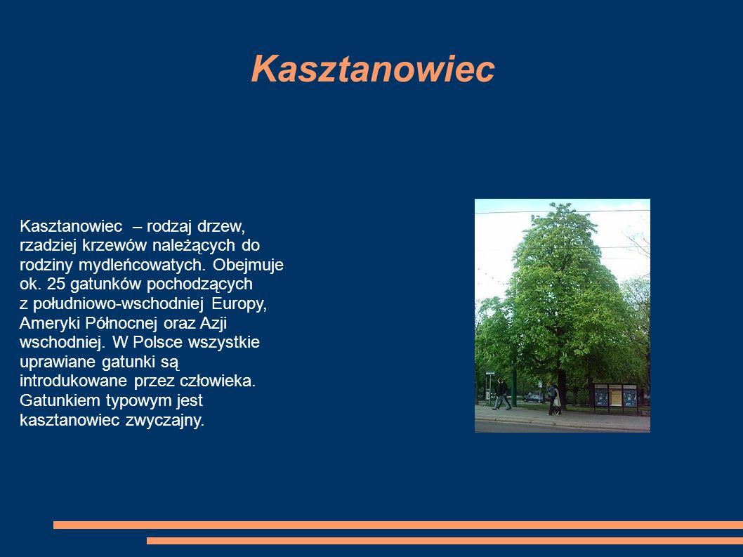 Kasztanowiec Kasztanowiec – rodzaj drzew, rzadziej krzewów należących do rodziny mydleńcowatych.