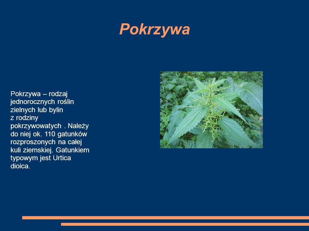 Pokrzywa Pokrzywa – rodzaj jednorocznych roślin zielnych lub bylin z rodziny pokrzywowatych.